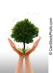 Tree alive - Hand - High resolution graphic of hands holding...