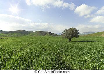 Tree alone in a sunny green field