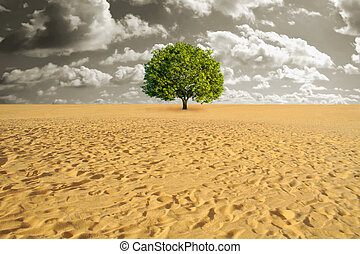 Tree alone in desert - A green tree alone in sand desert