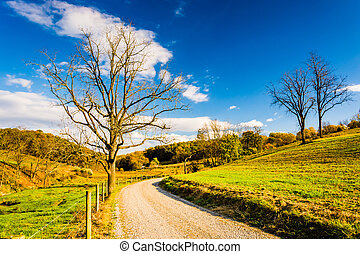 Tree along a dirt road in rural York County, Pennsylvania. -...