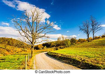 Tree along a dirt road in rural York County, Pennsylvania. -...