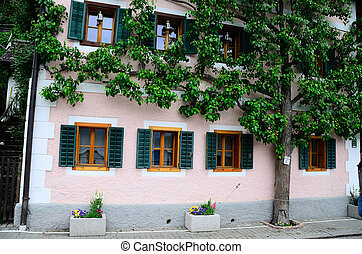 tree along house wall in Hallstatt - tree grows along a...