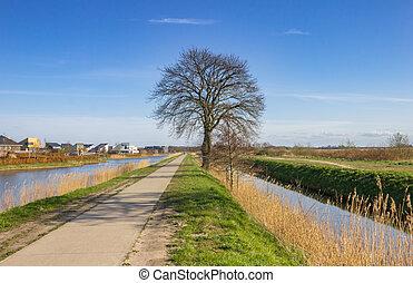 Tree along the canal in Nature reserve De Onlanden, Netherlands