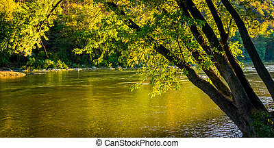 Tree along the Shenandoah River, in Harper's Ferry, West Virginia.
