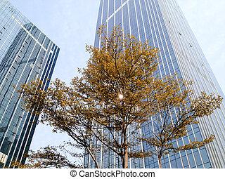 tree among buildings