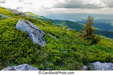 tree among the boulders on hillside. lovely scenery in...