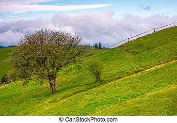 tree and a fence on a grassy hill. lovely springtime scenery...