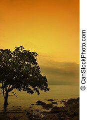tree and beach during sunset