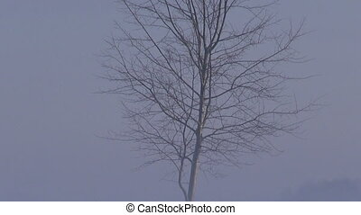 tree and bench in morning mist