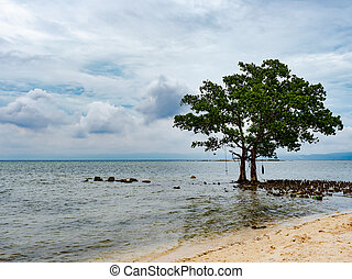 Tree and clouds in the Philippines