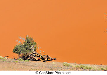 Tree and dune landscape near Sossusvlei, Namibia