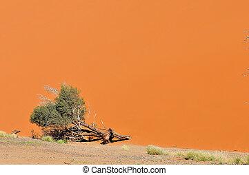Tree and dune landscape near Sossusvlei, Namibia