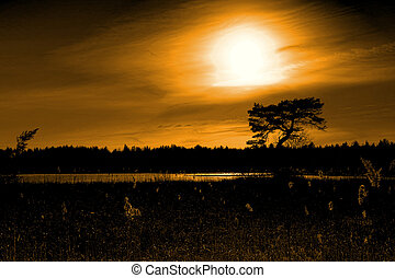 Tree and forest silhouette at sunset