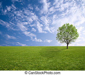 tree and grass in spring