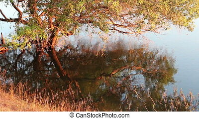 Tree and grass reflection in water - Close-up of tree and...