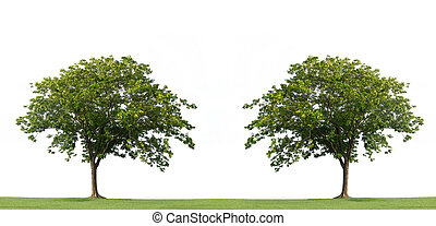 Tree and green grass isolated on the white backgrounds