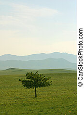 Tree and Hills