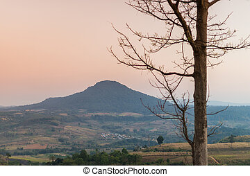 Tree and mountain with sunset sky landscape