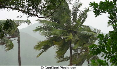 Tree and Palm trees under heavy rain and very strong wind. Tropical storm concept. Contains natural sound.
