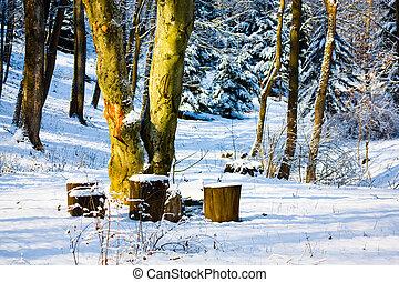 Tree and stumps