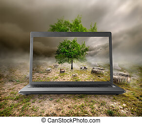 Tree and stumps on the monitor