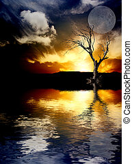 Tree and sunlight