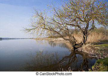 Tree and the lake is a peaceful countryside