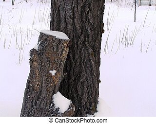 tree and tree stump in snow