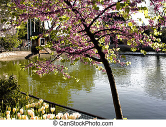 Tree and tulip by artifial lake at park in Istanbul