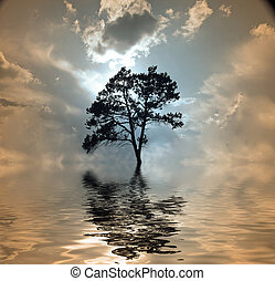 Tree and water