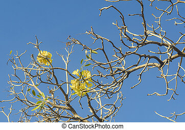 tree and yellow flower with blue sky background