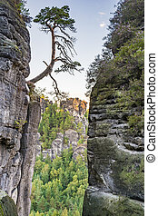Tree at a rock in the Elbe Sandstone Mountains