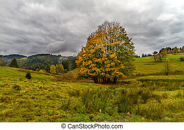 Tree at autumn in Black Forest, Germany