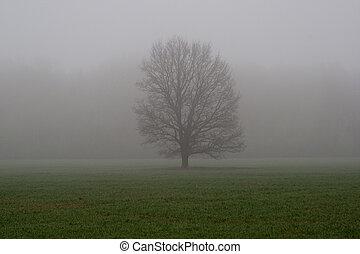 Tree at fog