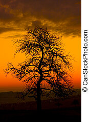 Tree at Morning