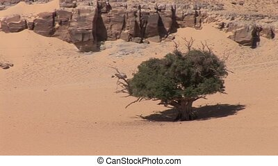 Tree At Nile In Egypt