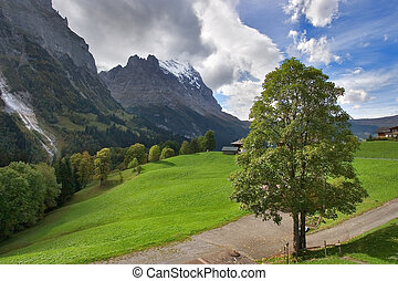 Tree at road -  Narrow road highly in the Swiss Alpes