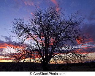Tree at sunset in the field