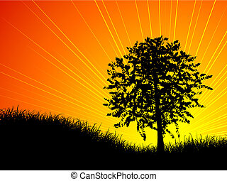 Tree at sunset - Sun setting behind a tree