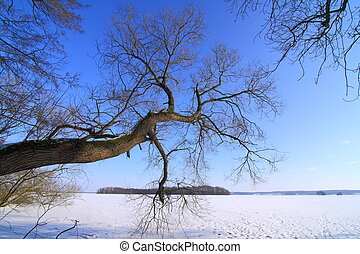 Tree at the lake in winter