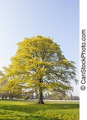 Tree at the park