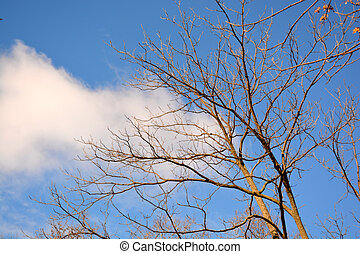 Tree Background with blue sky and clouds 6