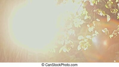 Tree backlit with blinking light - Tree backlit with...