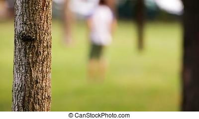Tree Bark Blurry Motion Background - Sharp clear bark tree...