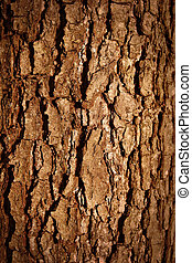 tree bark - close up of a wood brown bark texture