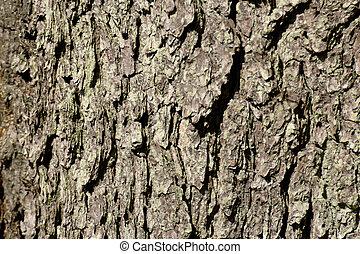 Tree bark close-up textured background