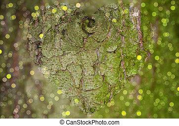 Tree bark closeup with clear heart shape