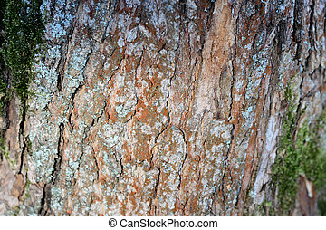 Tree bark covered with green moss texture background close up