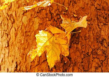 tree bark in autumn