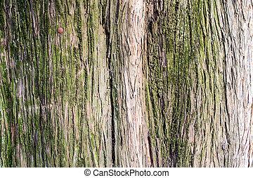 Tree Bark in Closeup